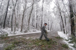 (MSMCC101) McComb, MS Percy Quin State Park assistant manager Mike Nelson removes a tree limb from the park's main road after heavy snow broke the limb Thursday morning December 11, 2008 in McComb, Mississippi. (The Enterprise-Journal, Aaron Rhoads)